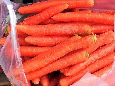 沙苑红萝卜