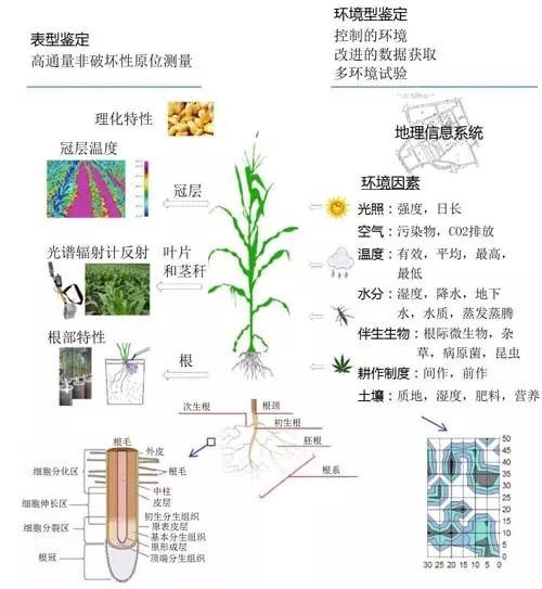 【育种技术】分子植物育种:进展与展望