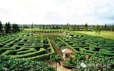 植物迷宫,休闲农业规划设计
