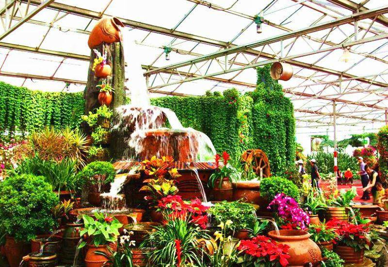 壁纸 成片种植 风景 植物 种植基地 桌面 800_550