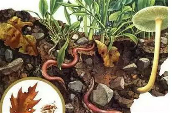 """只有当""""土壤,植物,动物"""