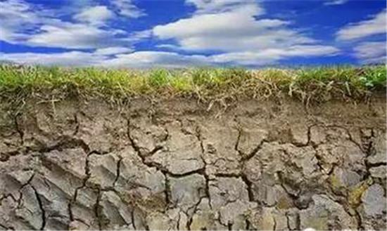 土壤物理结构得到了改善