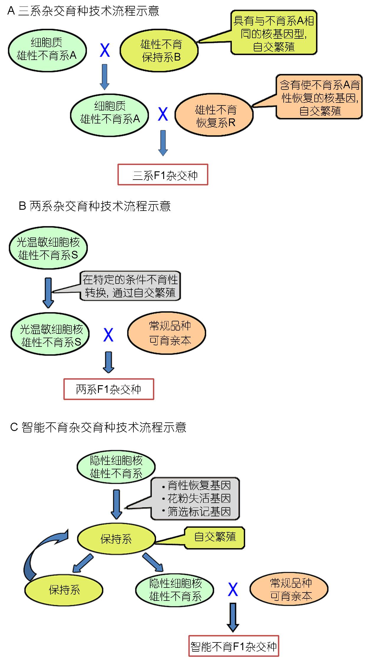 生物育种步骤图
